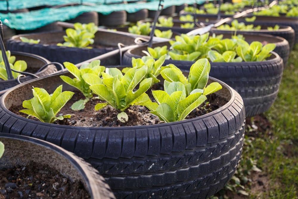 tire crops